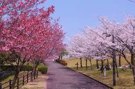 2019  CTJP06 日本本州東京大阪雙溫泉、和牛帝王蟹美食6日遊
