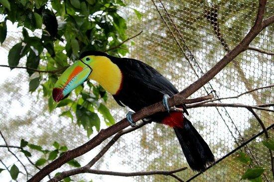 巴拿馬、哥斯達黎加精選十天遊
