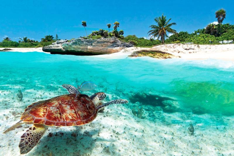 邁阿密 - 東加勒比海 8天7晚 豪華郵輪